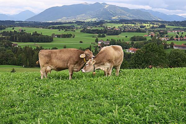 Fleisch aus achtsamer Produktion