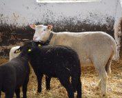 Tierhaltung in den kalten Monaten
