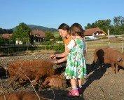 Sonja und Amelie vom Adamhof mit ihren Wollschweinen