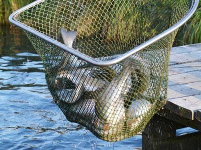 BIO Süßenbacher Naturfisch