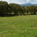 Tierhaltung am Bauernhof Tomale