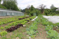 Bio-Gemüsegarten des Wurzerhof