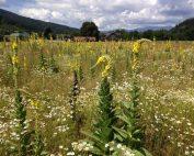 Im wilden Garten des Bio-Vöstlhofes wachsen Kräuter von höchster Güte
