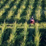 Blick in die Weinberge Foto: Elias Jerusalem