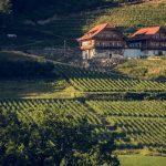 Eingebettet zwischen sanften Wäldern und gepflegten Weinbergen Foto: Elias Jersalem