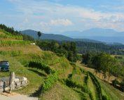 Blick vom Weingut Richtung Maria Saal