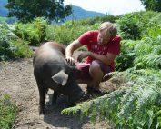 Georg M Lexer mit einem seiner Duroc Schweine