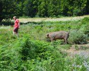 Georg M Lexer bietet seinen Tieren viel Platz und ein artgerechtes Leben