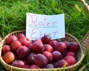 Apfelsorte Roter Eisner
