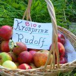 Apfelsorte Kronprinz Rudolf