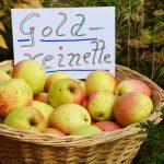 Apfelsorte Goldrenette