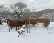 Selbst im tiefsten Winter wird den Tieren die Möglichkeit des Freiganges geboten