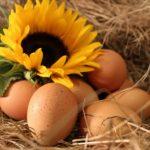 Bioeier von glücklichen Hühnern