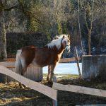 Pferdeleben im Winter