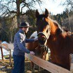 Gundolf Natmessnig mit seinen Pferden