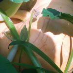Es wuchert und wächst im Garten des Schoberhofes