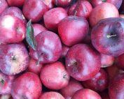 Reichen Apfelernte, die Basis für feinen Apfelbrand