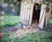 Hühnerstall in der Streuobstwiese