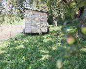 Hühnerstall im idyllischen Obstgarten