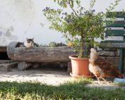 Katzen-Siesta am Brandstätterhof