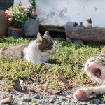 Feines Katzenleben am Hof
