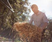 Das Stroh wird am Hof selbst eingebracht