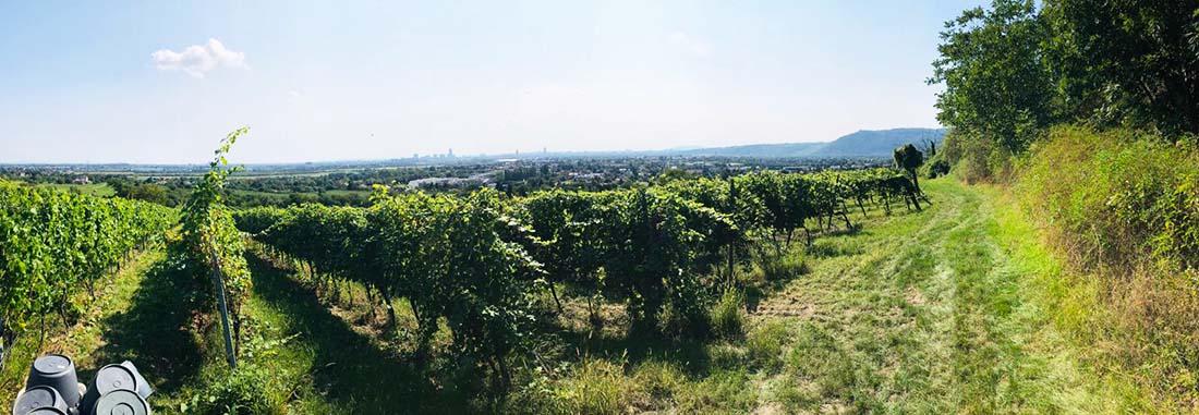 Blick vom Jungenberg Richtung Wien