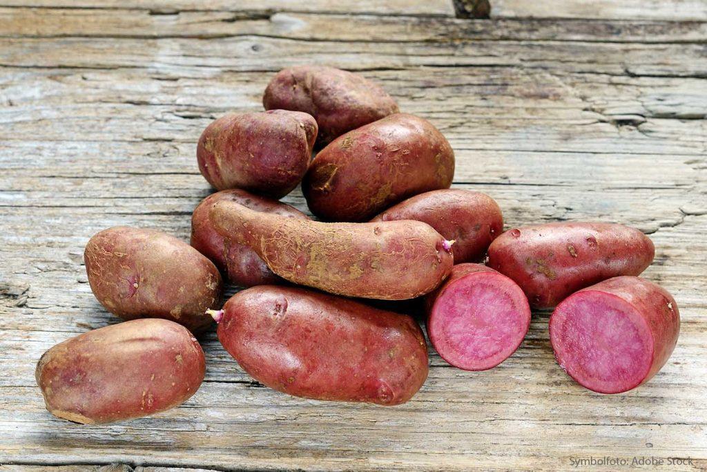 Bio Kartoffel Rote Emmalie